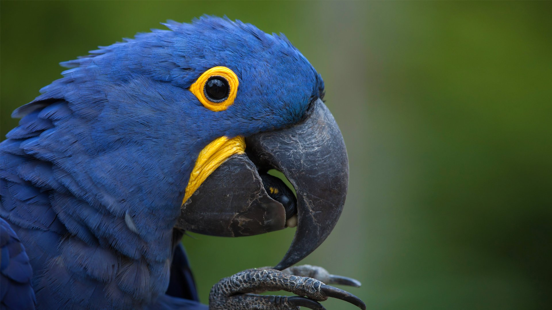 A Day of Wild Macaws