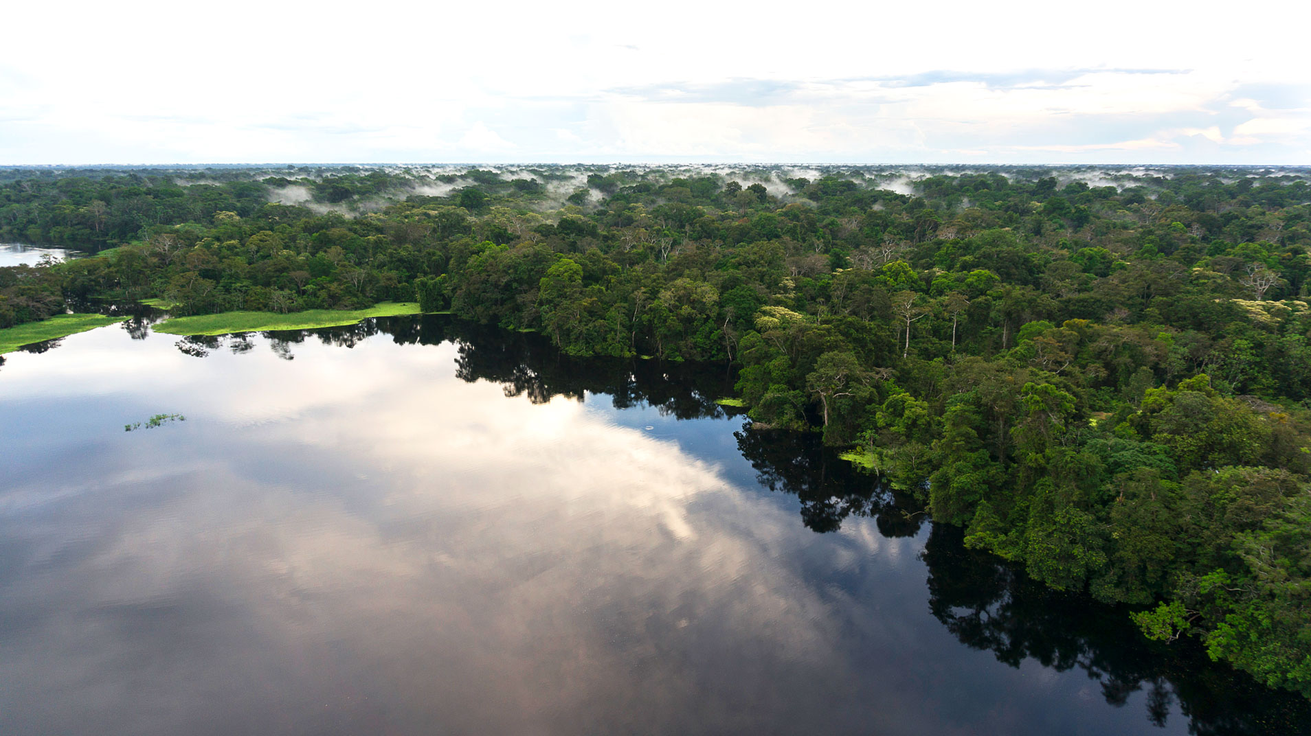 Amazon River Tours: discover the exotic experience of the jungle
