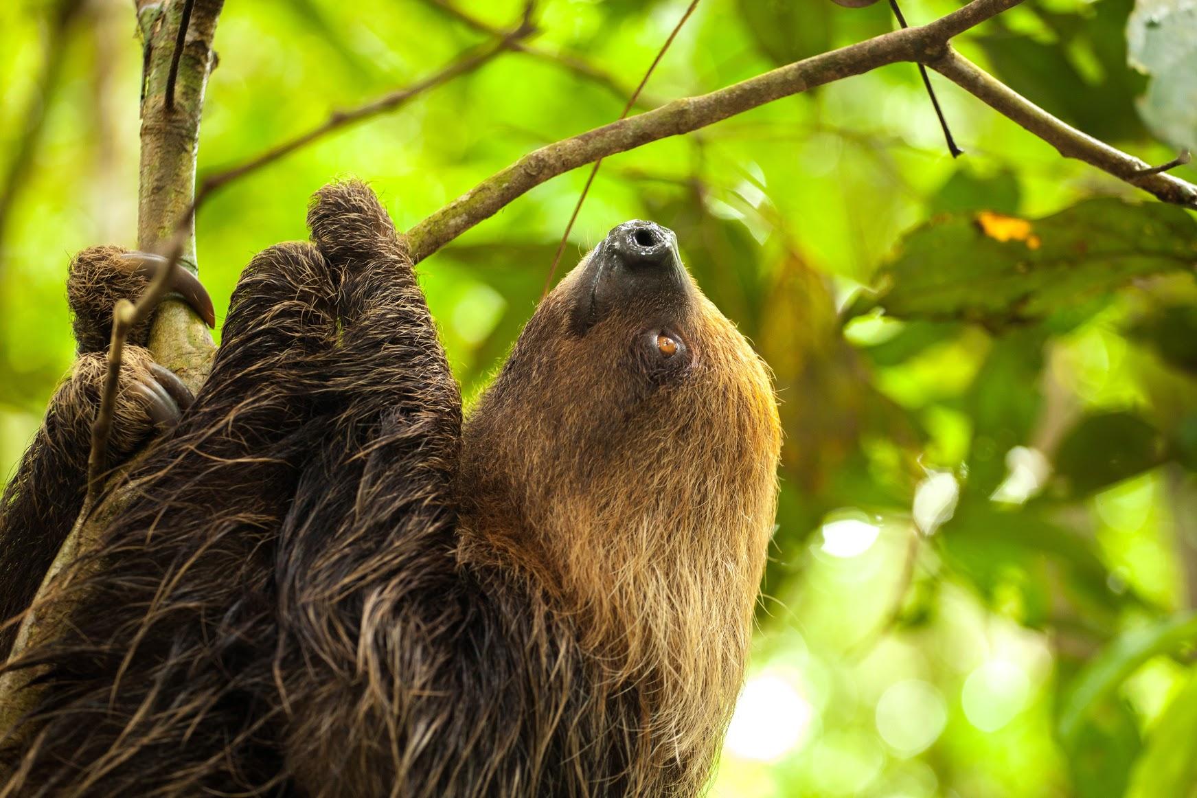 Pacaya Samiria Natural Reserve