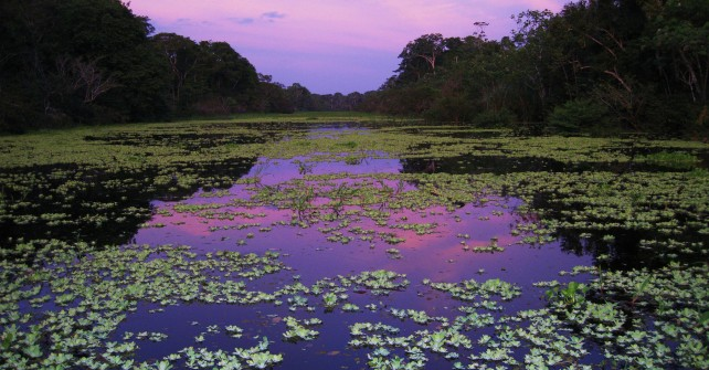 Peruvian Amazon River Cruises.