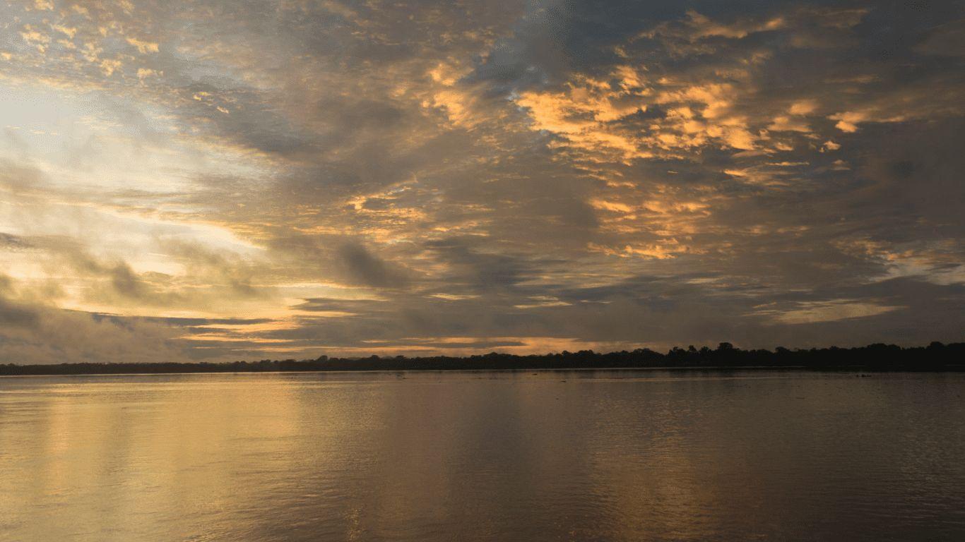Rainforest Sounds | Delfin Amazon Cruises