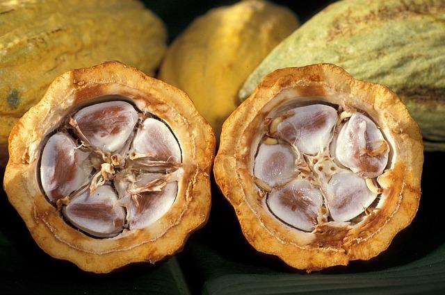 Amazon Cacao Plant