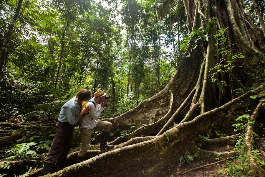 Ceiba Tree Amazon Jungle