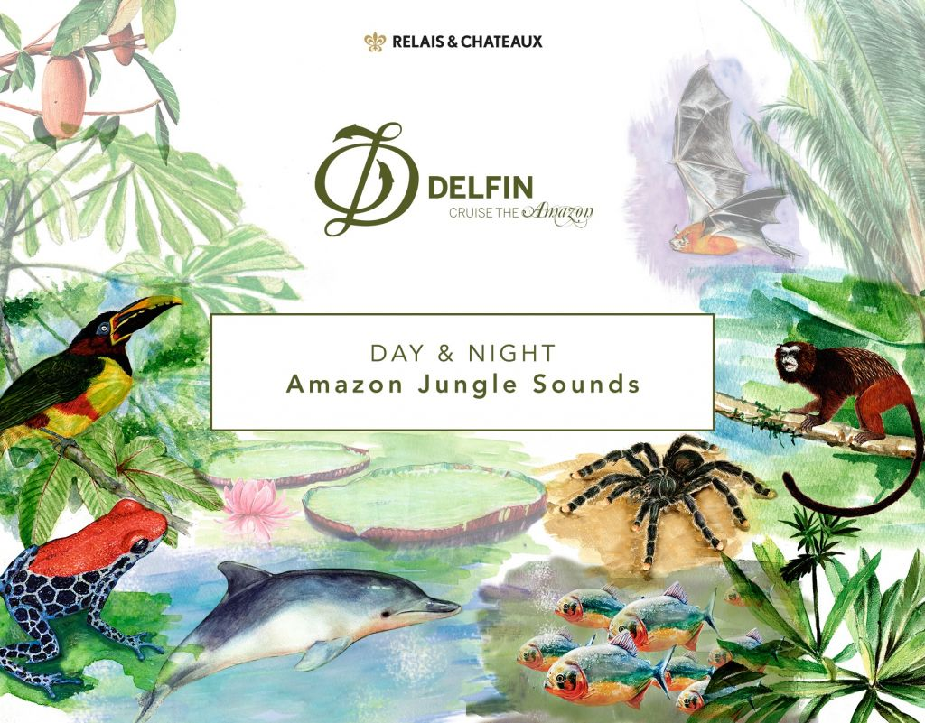 Amazon Jungle Sounds