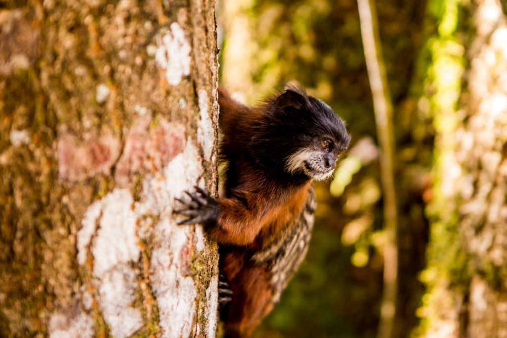 Wildlife Peru