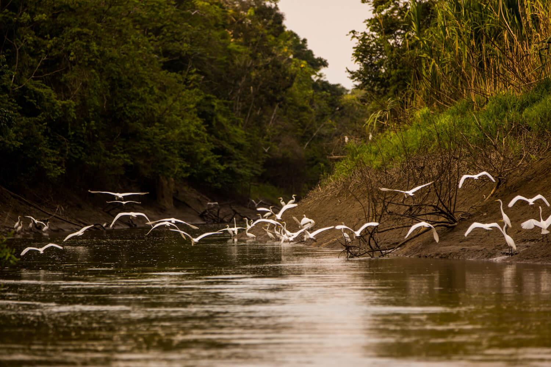 Legends of the Amazon: The Story of Pacaya Samiria